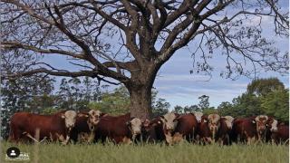 Foto: La Rural